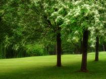 Grüne Oase von fotokunst