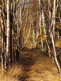 Herbstbirken by fotokunst