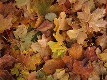 Herbstlaub by fotokunst