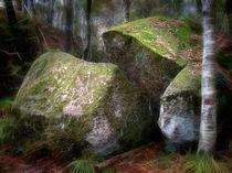 Zauberwald by fotokunst