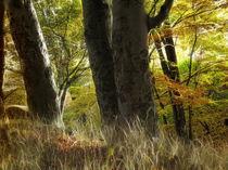 Herbstlicht by fotokunst