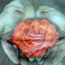 rose by Petra Daikeler