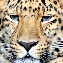 Leopard face von gnubier