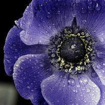 Anemone I by gnubier