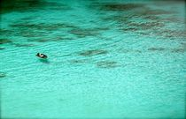 Similan Islands - Thailand by sherry dunnigan