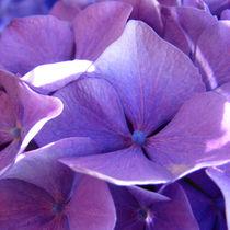 Flower nr.6 von svenja bary