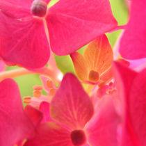 Flowers nr.1 von svenja bary