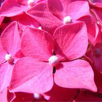 Flowers nr.3 von svenja bary