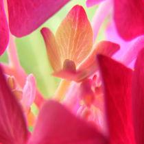 Flowers nr.6 by svenja bary