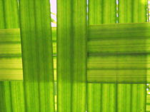 Palm Leaves nr.1 von svenja bary