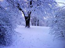 Winter Baum by wakanda