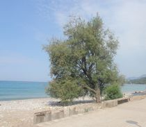 Tree at the sea by Raymond Zoller