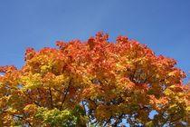 Herbst 2 von Peter M. Marxbauer