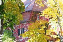 Herbst 1 von Peter M. Marxbauer