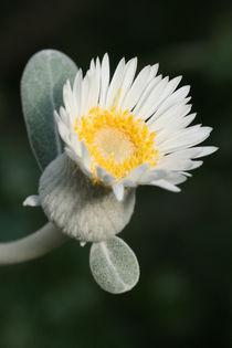 Blüte von Egon Rathke