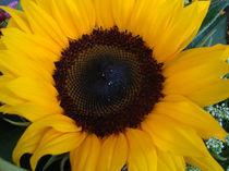 Sunny by tigertatze