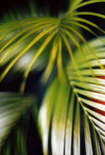 Palm by susann