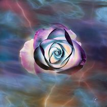 Lichtrose by claudiag