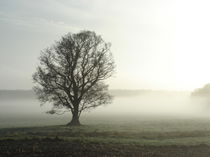 Nebelbaum von René Schmidt