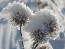 Winter in seinen schönsten Momenten von Nils Grund