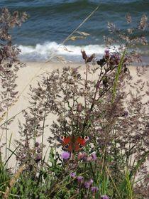 Schmetterling und Meeresküste by Nils Grund
