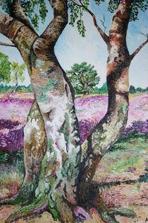 Birken  in der Heide by Ilona Betker