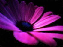 Blume in Lila by Walli Gutmann