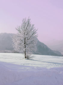 Frostiges Pink by Martina Rathgens