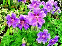 Violets von Susanne Klein