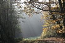 Lichtung an einem nebligen Herbstmorgen von Susanne Klein