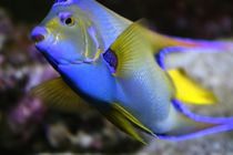 schöner Fisch von Susanne Klein