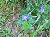 Blumenpaar violett von ksteffen