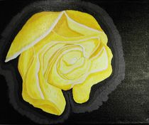 Rose gelb von ksteffen