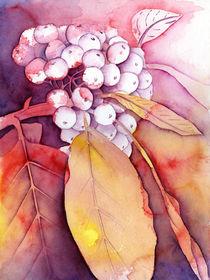 Herbst-Beeren von Nina Vahrenkampf