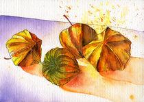 Lampionblumen von Nina Vahrenkampf