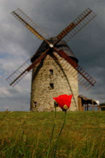 Mohnblüte mit Windmühle von Daniel Kühne