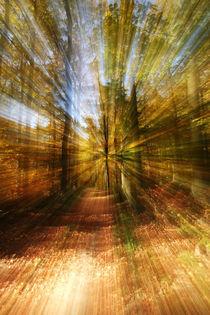 zoom by Daniel Kühne