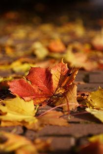 Herbstblatt by Daniel Kühne