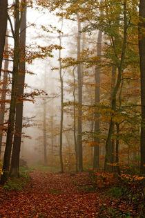 Herbstweg by Daniel Kühne