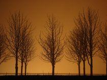 Bäume bei Nebel von Isabell Krauße