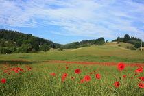 Mohn-Landschaft von Isabell Krauße