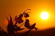 Sonnenuntergang inmitten der Natur von Isabell Krauße