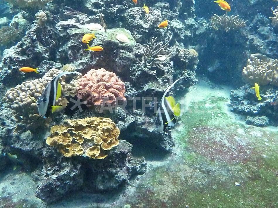 """""""korallenriff"""" fotografie als poster und kunstdruck von"""