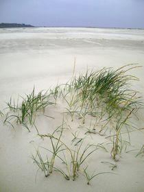 Strandhafer von Michael Beilicke