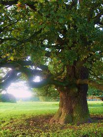 Kraftbaum von Michael Beilicke