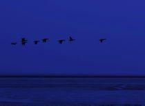 Nachtflug by Michael Beilicke