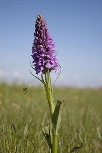 Orchidee von Michael Beilicke