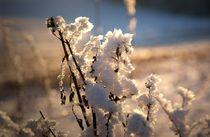 Schneekristalle, die in der Sonne glänzen von Juana Kreßner