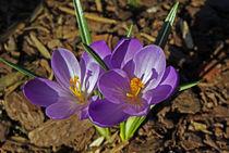 Endlich Frühling! by Juana Kreßner