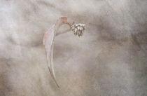 'Broken dreams' by Maria Ismanah  Schulze-Vorberg